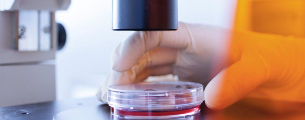 Láminas Antibacterias. Láminas de Seguridad Antibacterias.